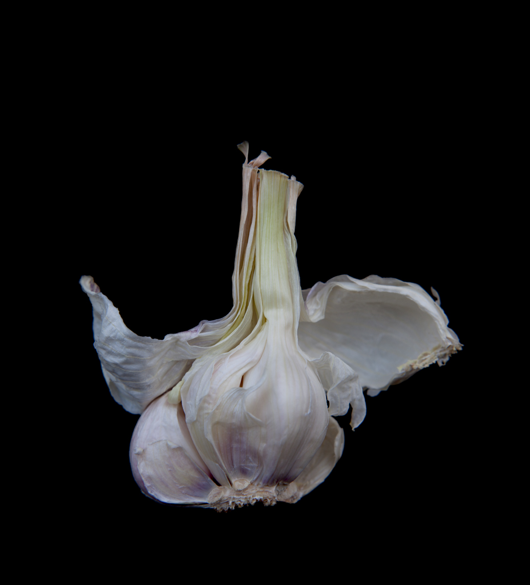 Axel Bernstorff, Collectable limited edition fine art photographic prints. Garlic drama. (Allium sativum)
