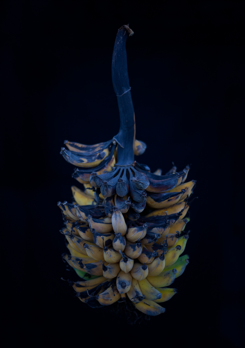 Axel Bernstorff, Collectable limited edition fine art photographic prints. New Zealand Misi Luki banana bunch.