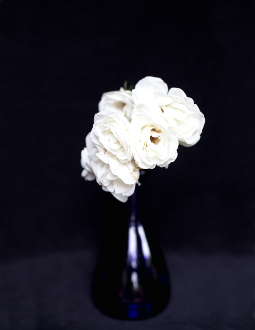 Axel Bernstorff, Collectable limited edition fine art photographic prints. Double white wild rose, from a Chelsea garden.